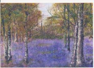 Bluebell Wood Betty Wartersjpg